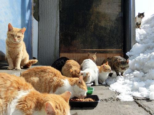 地域猫餌やり風景.jpg